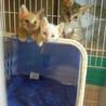 可愛い子猫3匹 【1.5ヶ月】