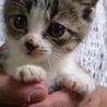 かわいい兄妹猫の里親さん募集