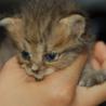 かわいい赤ちゃん猫を飼ってもらえませんか