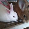 ☆二匹のミニウサギ☆