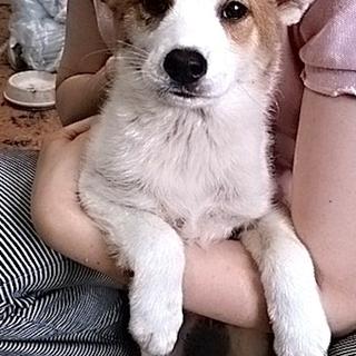 mix♀ 子犬ランちゃん
