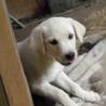♡子犬・メス・2ヶ月♡