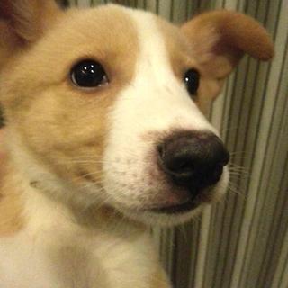 mix♀ 子犬チャロ