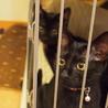 可愛い黒猫ちゃん!最後の一頭トライアル中です