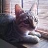 4ヶ月の人懐っこく元気なキジトラの女の子