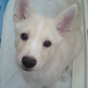 生後4ヶ月のmixオス子犬、元気です