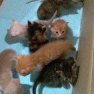 緊急!段ボールに捨てられていた子猫たち