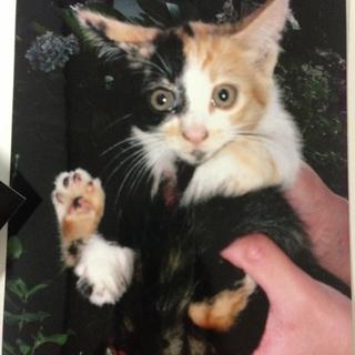 保護猫の里親募集