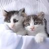 子猫二匹の里親募集