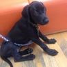 ミックス犬2ヶ月☆
