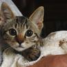 とっても可愛い子猫です!