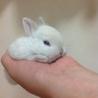 子ウサギと親ウサギの里親大募集ー終了!