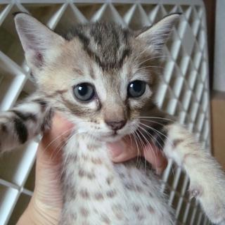 美猫!うすいさん