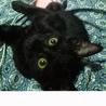 あまり鳴かない黒猫 少人数家族向き