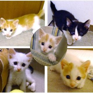 5匹すべて決まりました【保護猫】生後2ヶ月