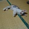 元気な甘えん坊の三毛猫さんです♪