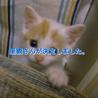 5匹すべて決まりました【保護猫】生後2ヶ月 サムネイル6