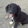 ララちゃん♀ 人懐こい黒犬ちゃんです!