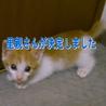 5匹すべて決まりました【保護猫】生後2ヶ月 サムネイル4