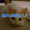 5匹すべて決まりました【保護猫】生後2ヶ月 サムネイル5
