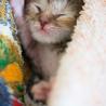 生まれたばかりの子猫の里親になって下さる方