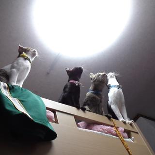4匹のメス猫ちゃん
