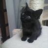 【大分】生後一か月の黒猫ちゃん