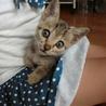 子猫ちゃんの里親になってくれる人を探しています!