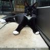 ベタベタ・甘甘のタキシード猫です・・。