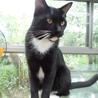 人間大好き甘甘のタキシード猫