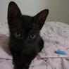 生後6週、人・犬・猫慣れした子猫 性格保証^^