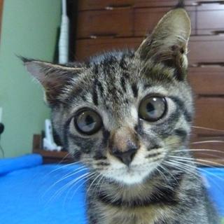 下半身麻痺の仔猫、正式譲渡!