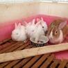 子ウサギの里親募集!