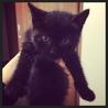 【募集中!】かわいい黒猫のオス。生後2か月程度。