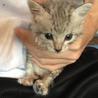 熊本県内で捨て猫の飼い主募集