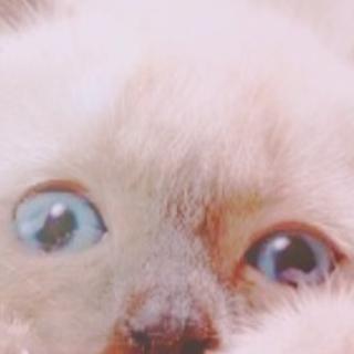 青い瞳が綺麗な子猫の家族を募集