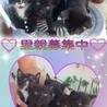 ☆残り♀の黒猫ちゃん2匹!里親募集中☆
