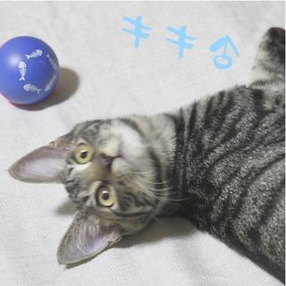 11月30日譲渡会参加!去勢済み兄弟子猫。