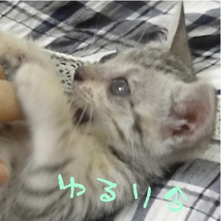 10月19日豊中市保健所の犬猫譲渡会に参加!