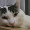福島第一原発被害猫 ハリー ほんわかした超甘えん坊 サムネイル4