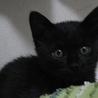 人懐こくてかわいい黒猫です