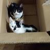 三ヶ月の子猫 二匹