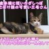 美人&可愛いちゃんの三毛子猫姉妹 サムネイル7
