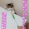美人&可愛いちゃんの三毛子猫姉妹 サムネイル6
