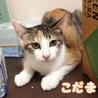 美人&可愛いちゃんの三毛子猫姉妹 サムネイル2