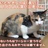 美人&可愛いちゃんの三毛子猫姉妹 サムネイル3