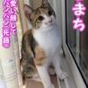 美人&可愛いちゃんの三毛子猫姉妹 サムネイル5