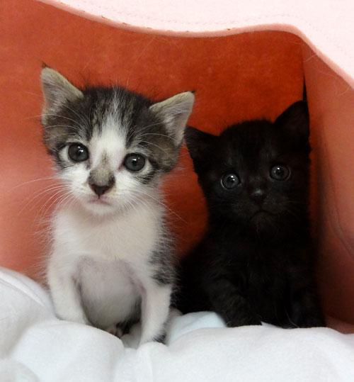黒猫と白い猫
