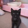 ほわほわの黒子猫ナイト君