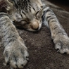 小さなキジ猫「みみ」ちゃん